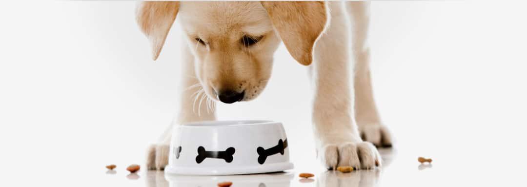 Кучешка храна