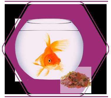 Храни за риби