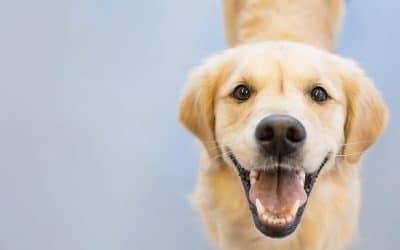 Какво количество храна да давате на кучето си?
